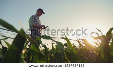felelős · gazdálkodás · gazda · búza · növények · növekedés - stock fotó © ruslanshramko