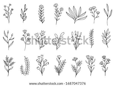 花 手描き コレクション スケッチ フローラル パターン ストックフォト © frescomovie