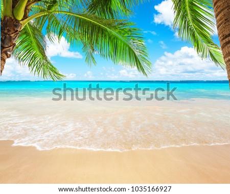 熱帯 手のひら 水 海 地平線 表示 ストックフォト © Wetzkaz