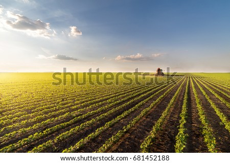 Green cultivated soybean field in spring Stock photo © simazoran