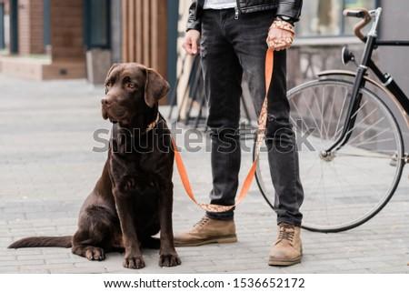 Cute labrador hond vergadering eigenaar permanente Stockfoto © pressmaster