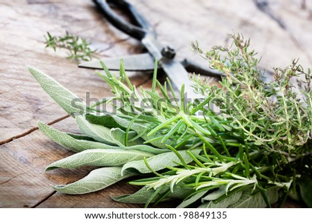 Fresh Kitchen Herbs Photo stock © mythja