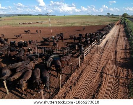 Gado rebanho branco vacas natureza campo Foto stock © manfredxy