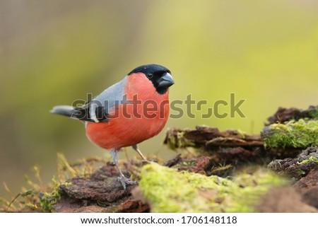 Brillante hermosa aves naranja animales negro Foto stock © taden
