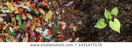 Solo cozinha frutas vegetal lixo Foto stock © Lightsource