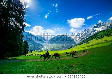 Cavalli himalaya India valle natura cavallo Foto d'archivio © dmitry_rukhlenko