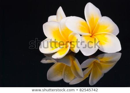 花 · 水 · ボウル · ブラウン · 春 · 自然 - ストックフォト © Ansonstock