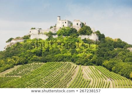 rovine · castello · vigneto · abbassare · Austria · costruzione - foto d'archivio © phbcz