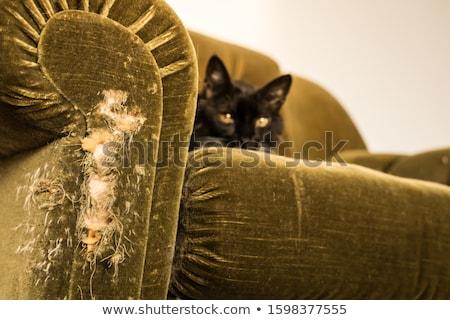 Szégyenkezve cica természet macska haj piros Stock fotó © pterwort