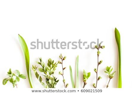 Widoku trawy biały wiosną charakter zdrowia Zdjęcia stock © rufous