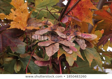 Bunch of multicolored oranges hanging on a tree  Stock photo © Balefire9