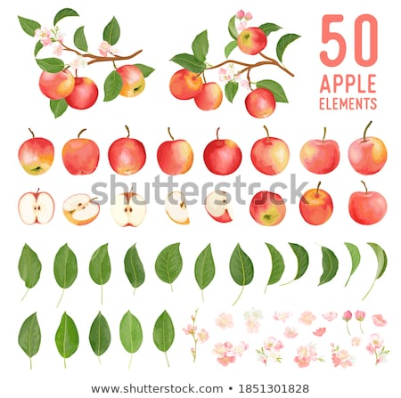 Apple flowers stock photo © alexandkz