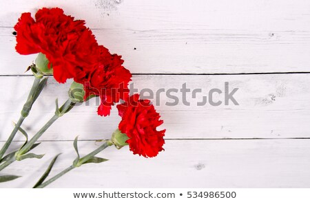 Stock photo: woman and red carnations