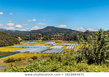 rural landscape with cultivation in greenhouse stock photo © deyangeorgiev