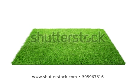 Football And Grass Isolated Stock photo © Lightsource