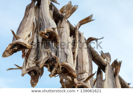 fish drying outside stock photo © dinozzaver