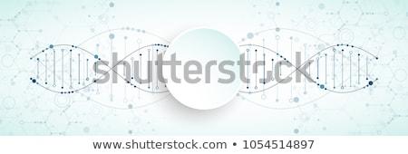Chromosome numérique résumé science microscope humaine Photo stock © 4designersart