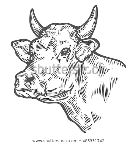 商业照片 / 矢量图: 牛 · 头 · 黑白 · 食品 · 面对 · 艺术