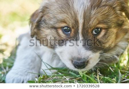 Fű portré aranyos legény átkarol bolyhos Stock fotó © pressmaster