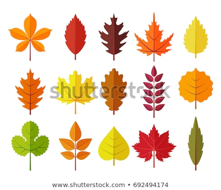 Rood blad kleur vallen kleuren Stockfoto © stocker