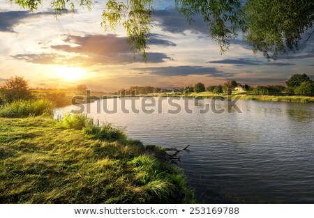 sun over pond and green grass stock photo © mycola