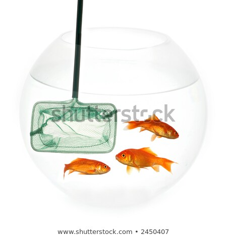 Goldfish in fishingnet stock photo © c-foto
