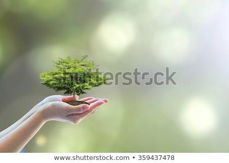 çevre dostu ağaç yenilenebilir kaynaklar geri dönüşüm kâğıt Stok fotoğraf © Lightsource