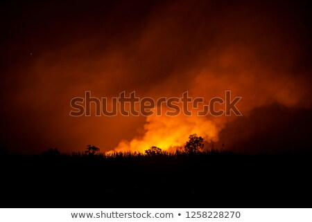 Sugarcane field fired Stock photo © rufous