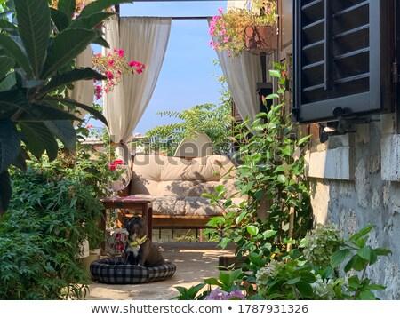 Lush courtyard Stock photo © smithore