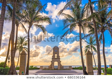 palm beach stock photo © oblachko