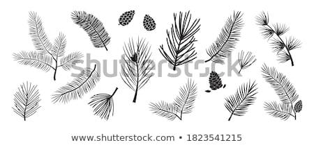 Pine tree twig and cones Stock photo © olandsfokus