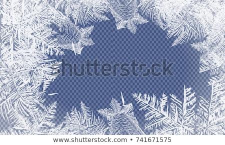 Mróz pozostawia zimą trawy liści Zdjęcia stock © pedrosala