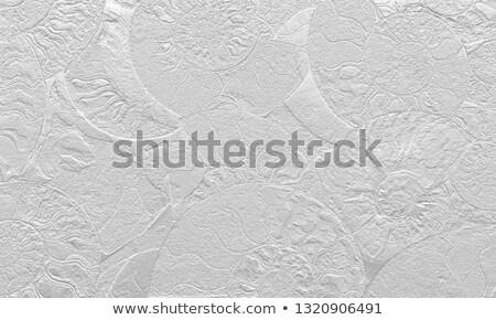 Fossiel mooie geologie natuurlijke achtergrond steen Stockfoto © jonnysek