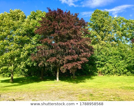chêne · printemps · couleur · ciel · bleu · ciel · arbre - photo stock © olandsfokus