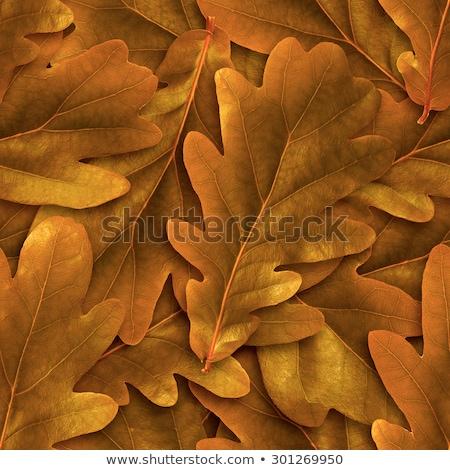 Végtelenített tölgy levél háttér narancs ősz Stock fotó © Leonardi
