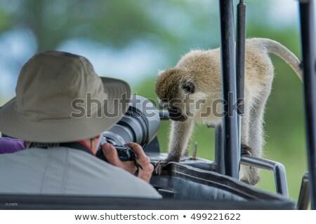 Pawian parku przyrody rezerwa Tanzania Afryki Zdjęcia stock © Mariusz_Prusaczyk