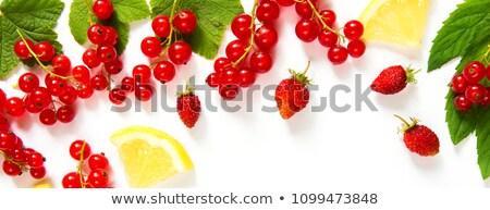 Vörös ribiszke bogyók izolált fehér természet piros Stock fotó © laky981