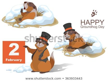 Happy Groundhog Day. Marmot climbed out of hole and yawns Stock photo © orensila