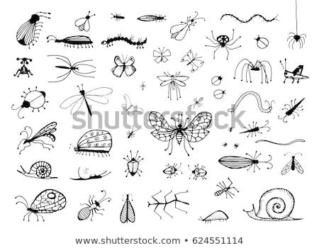 besouro · preto · e · branco · estilizado · rabisco · étnico - foto stock © netkov1