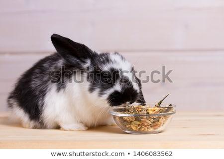 glass bowl with a rabbit Stock photo © Oksvik