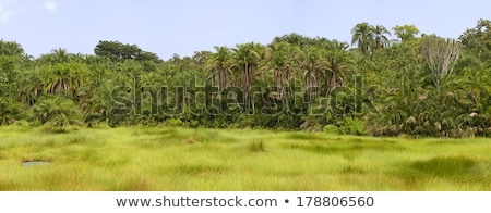 African Jungle Landscape Stock photo © THP
