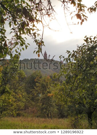 fák · naplemente · Németország · égbolt · természet · mező - stock fotó © meinzahn