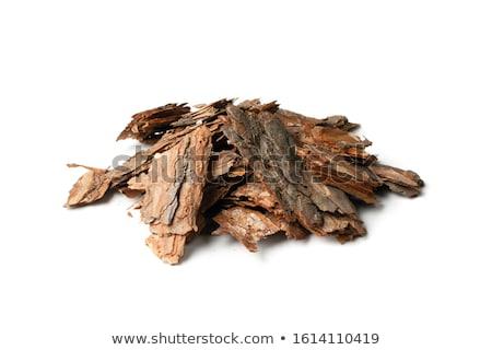 Pino corteza patrón pino sin costura textura Foto stock © Suljo