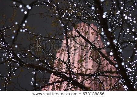 Эмпайр-стейт-билдинг за деревья парка Manhattan цветы Сток-фото © rmbarricarte