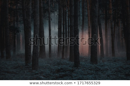 暗い · 森林 · 実例 · シーン · 1泊 - ストックフォト © magann