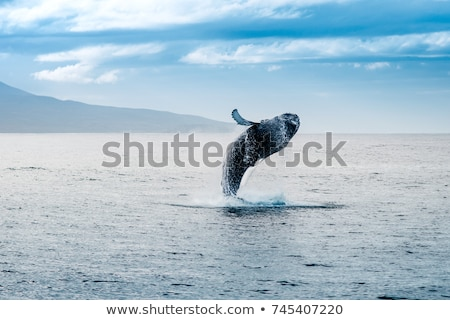 Whale watching Stock photo © alexeys