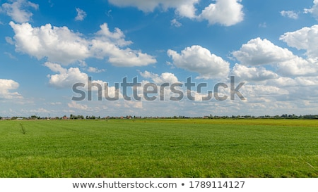 Landelijk zomer landschap holland en velden Stockfoto © Olena