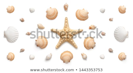 Foto stock: Aislado · conchas · blanco · playa · naturaleza · diseno