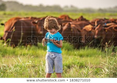 vacche · prato · estate · campo · blu · latte - foto d'archivio © tilo