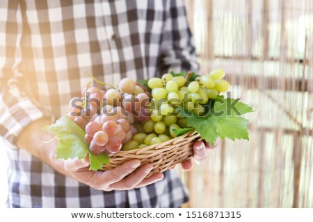 Stock photo: Farmer holding pink and white grapes